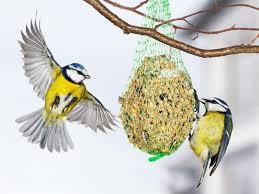 Przedszkolaki dokarmiają ptaki